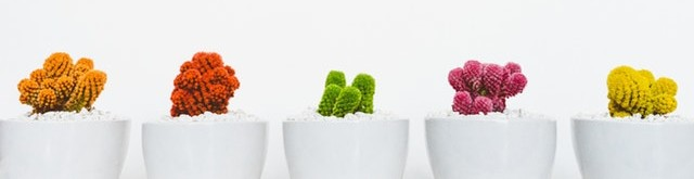 Potted plants are a metaphor for splitting a bank's board portal between multiple apps.